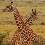 «Акуна Матата» или путешествие в Кению